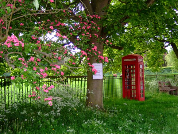 Looking past the Telephone Box Book Exchange towards Banks Field on Main St in Burton Overy